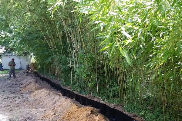 nj bamboo landscaping