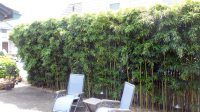 Privacy Hedges - NJ Bamboo Landscaping