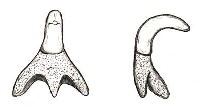 Big Brook Hybodont Shark Page