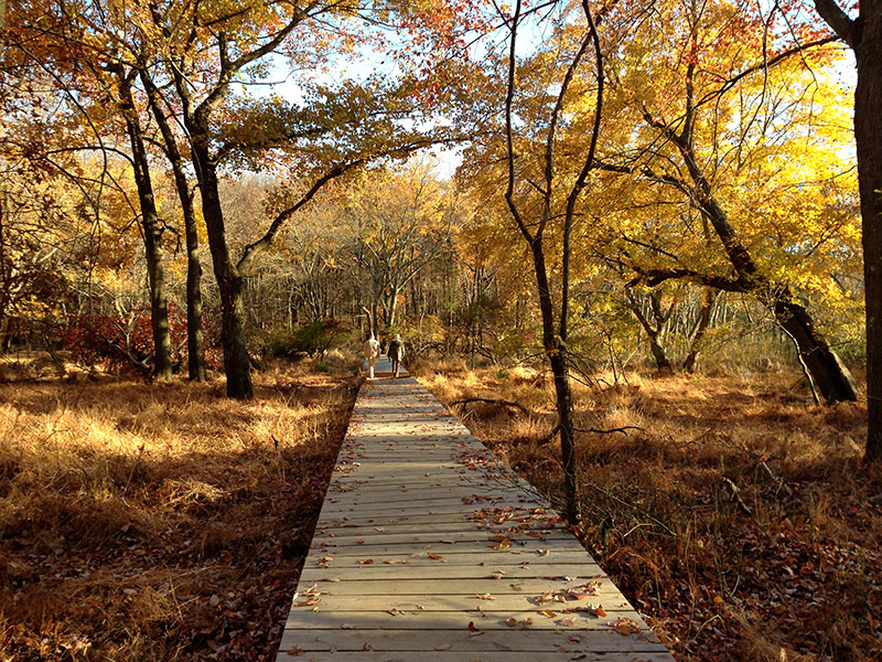 Central Park In Fall Wallpaper Cheesequake State Park Green Trail Njhiking Com