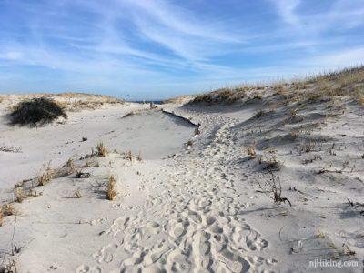 Island Beach State Park | njHiking.com