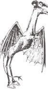 The Secret History of the Jersey Devil—New Jersey State Library