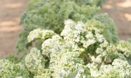 KALE: The Superfood That NEEDS a Good Rubdown