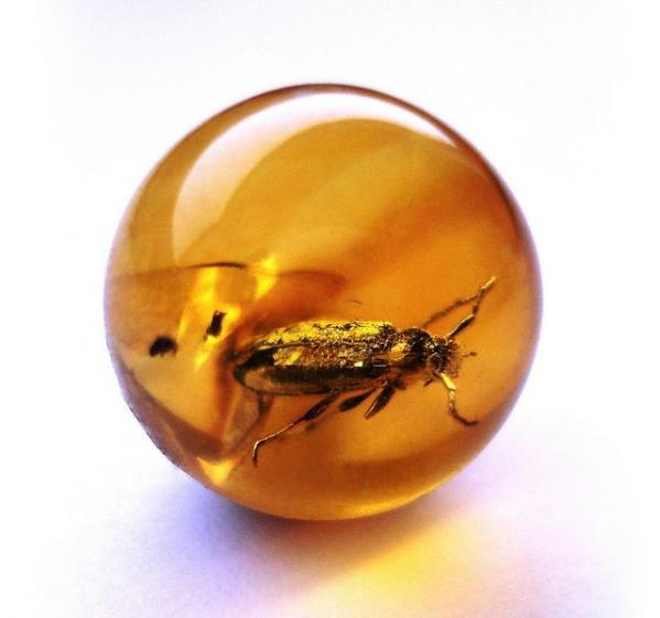 amazing-images-of-prehistoric-creatures-trapped-in-amber-21697