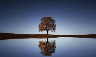 Ağaç Sevgisi İle İlgili Kompozisyon