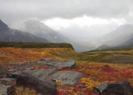 Tundra Ne Demek? Tundra Toprakları ve Tundra İklimi Hakkında Bilgi
