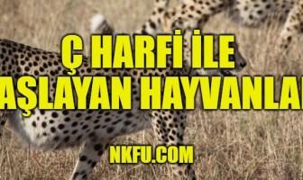 Ç Harfiyle hayvan