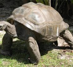 Kaplumbağaların Üzerindeki Kabuk Ne İşe Yarar? Görevleri Yapısı