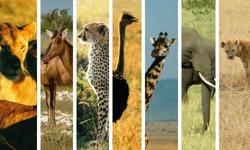 Canlılar - Hayvanlar