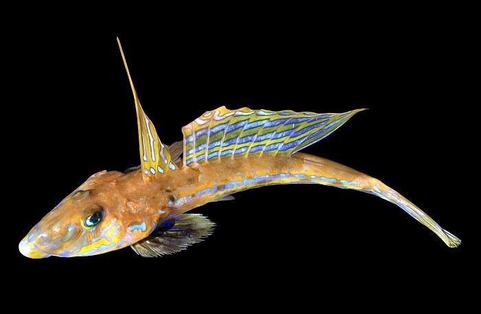 Üzgün Balığı