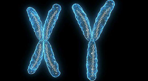 X ve Y Kromozomu