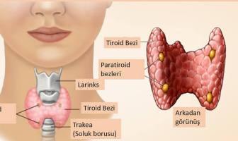 Tiroid nedir? Tiroid Hastalıklarının Belirtileri Nelerdir?
