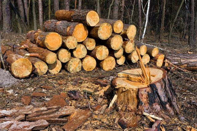 Ormansızlaşma