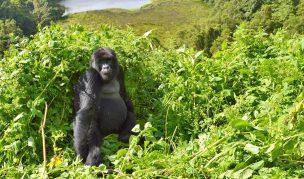 8 Days Uganda & Rwanda Gorilla Trekking Safari