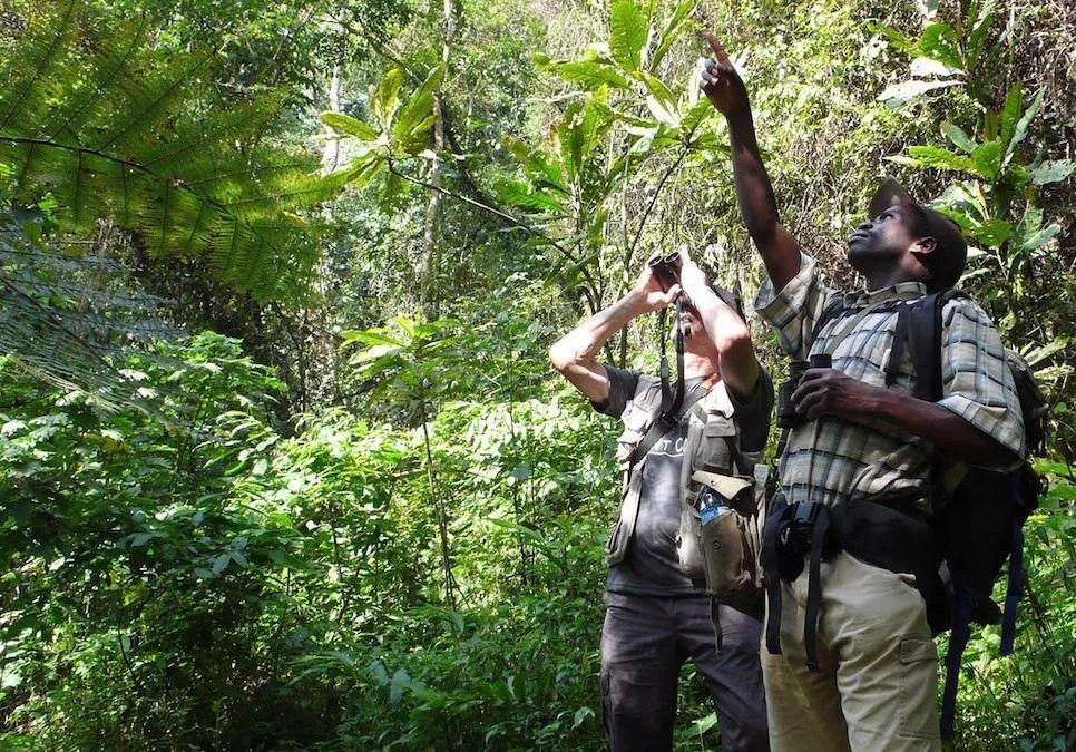 Birdwatching in Uganda