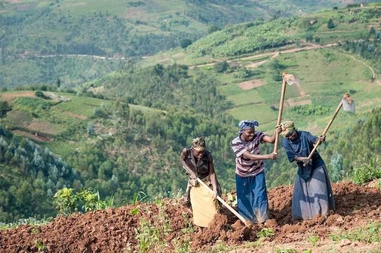 farmers rwanda