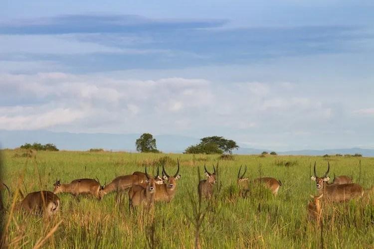 Queen Elizabeth NP, Uganda
