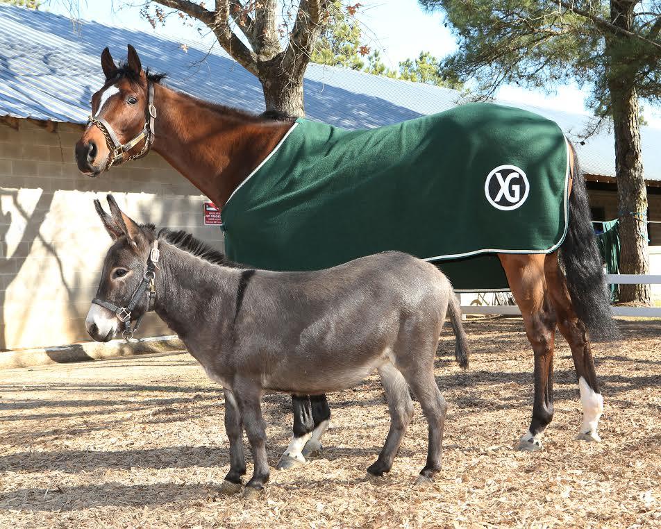 Fergie the Donkey gaining celebrity status as barn