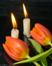 candles and tulips