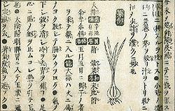 Honzo Wage Yakusei Zuko