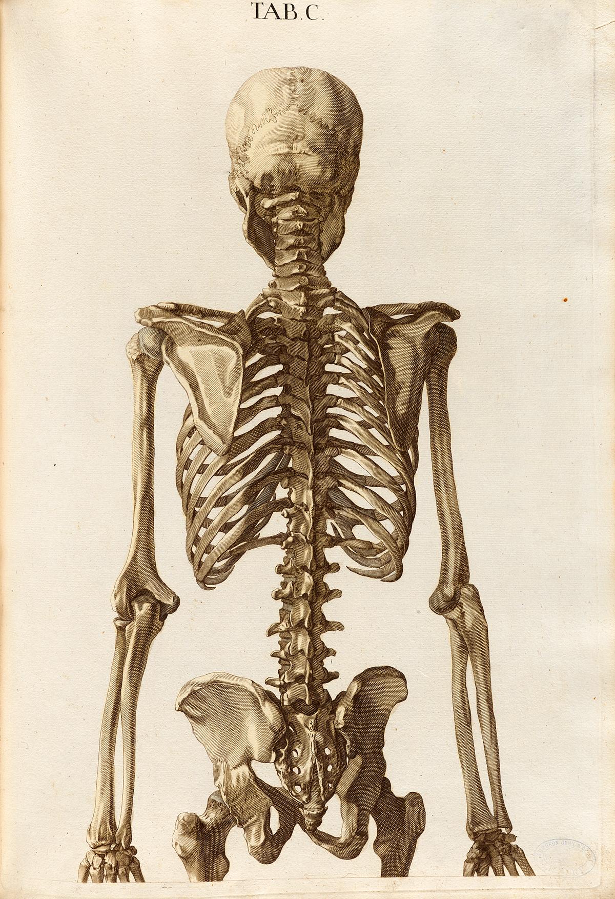 Historical Anatomies On The Web Christoph Jacob Trew
