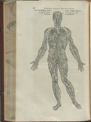 Historical Anatomies on the Web: Andreas Vesalius Home