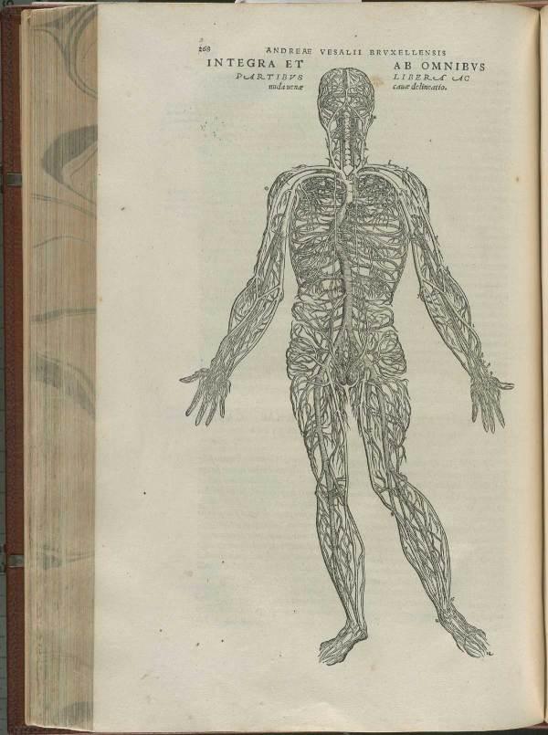 Historical Anatomies Web Andreas Vesalius Home