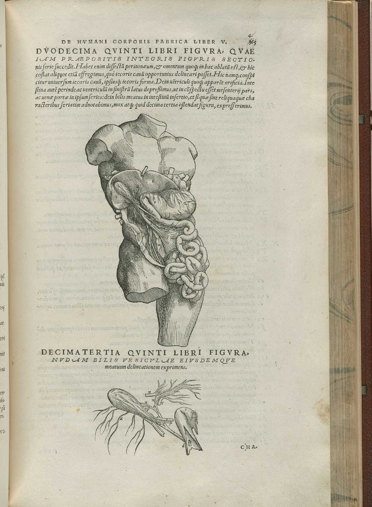 Historical Anatomies on the Web Andreas Vesalius Home
