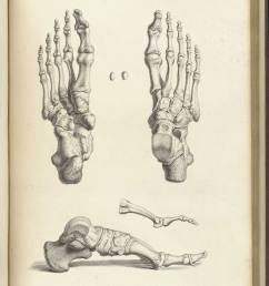 engraving showing three views of the bones of the foot upper right the foot from [ 1200 x 1615 Pixel ]