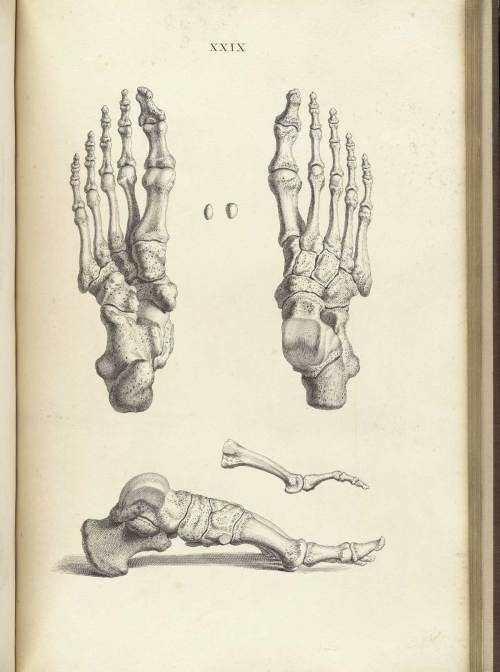 small resolution of engraving showing three views of the bones of the foot upper right the foot from