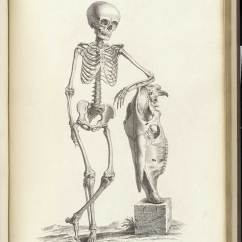 Deer Skeleton Diagram Mazda 6 Bose Subwoofer Wiring Historical Anatomies On The Web: William Cheselden Home