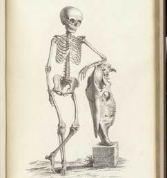 engraving of standing skeleton of a boy about nine years old leaning up against the skull [ 1200 x 1599 Pixel ]