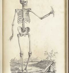 engraving of a standing facing male skeleton in a pastoral setting with his left hand outstretched [ 1200 x 1612 Pixel ]