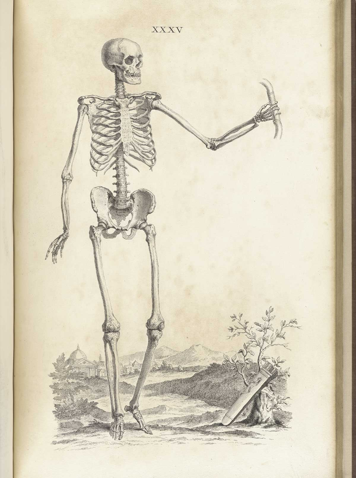 hight resolution of engraving of a standing facing male skeleton in a pastoral setting with his left hand outstretched