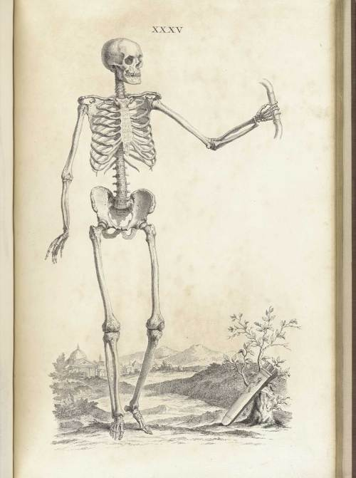 small resolution of engraving of a standing facing male skeleton in a pastoral setting with his left hand outstretched