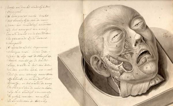 Historical Anatomies Web Browse Titles