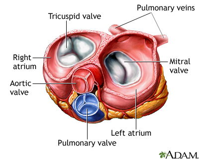View of valves @ level of anulus fibrosus