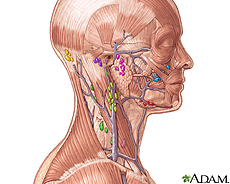 Illustration of the lymph nodes in the head and neck