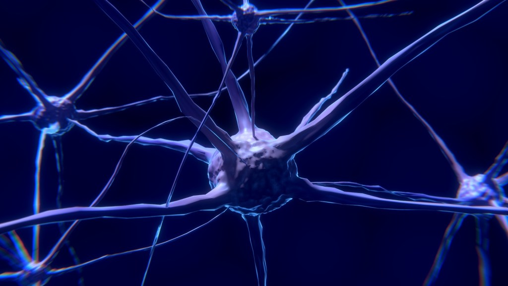 memory nerve cell