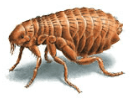 fleas are a pest in the garden