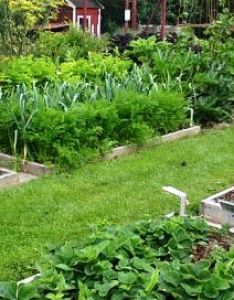 Rotating vegetable plots also crop rotation planting plant succession by crops rh no dig vegetablegarden