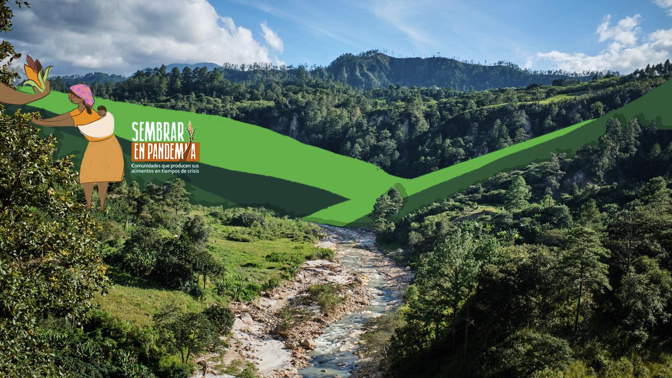 Sembrar autonomía en el territorio indígena de Montaña Verde