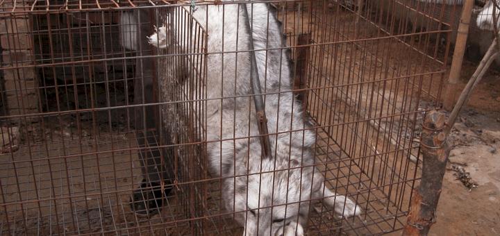 中国毛皮産業の実態