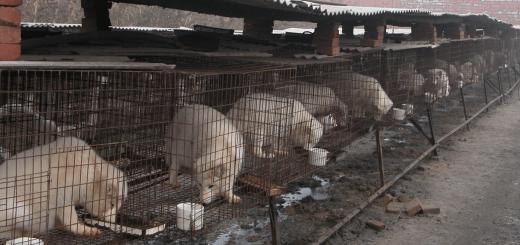 中国毛皮産業