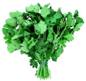 Coriander Benefit and Side Effect