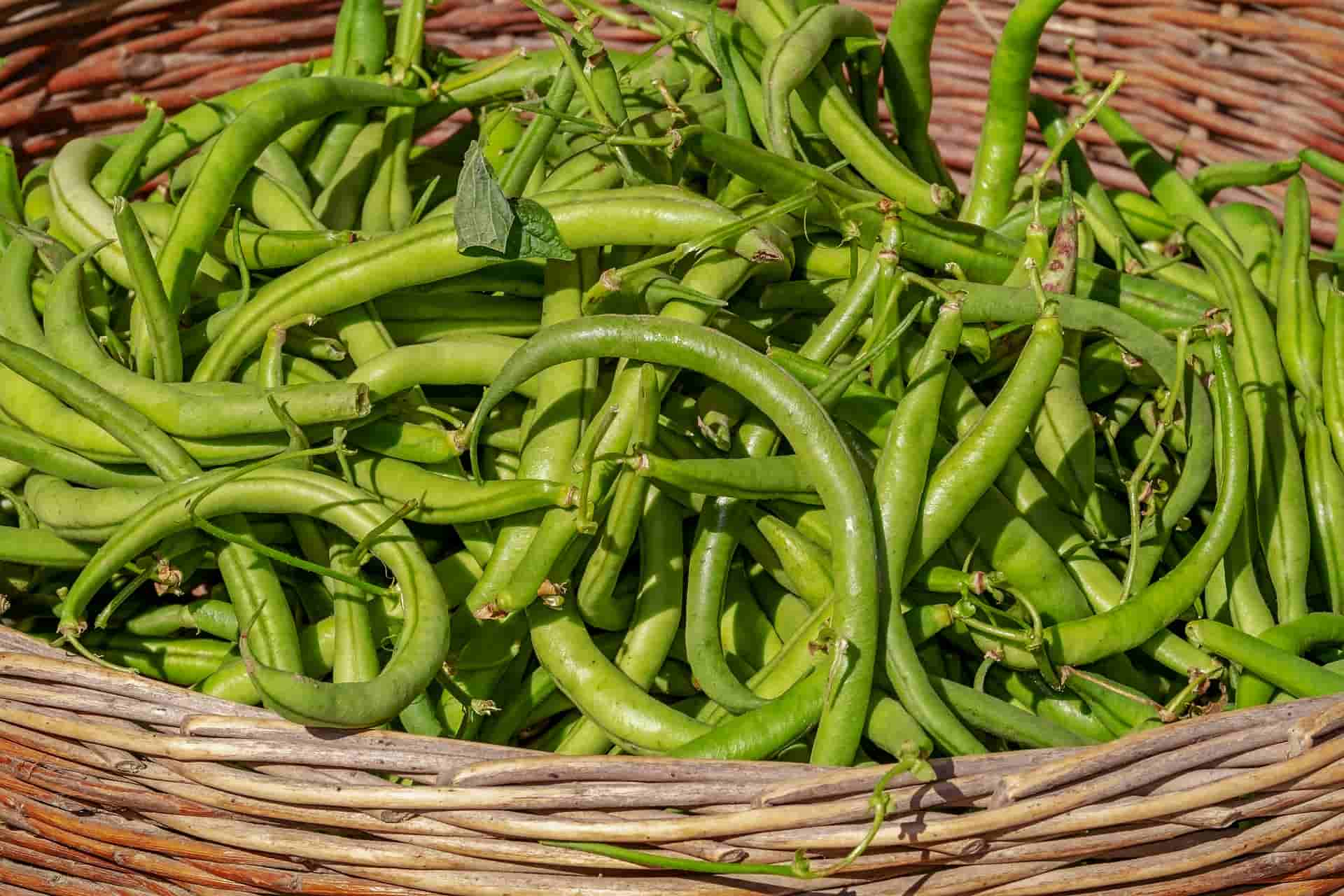 6 Green Bean Benefits and Nutrition Value