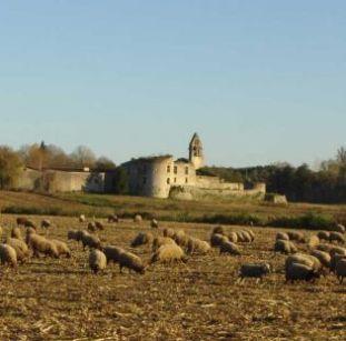 ChateauNoaillan