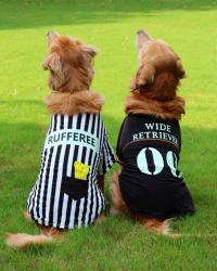 25+ Creative Costumes for Dogs
