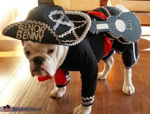 Fall Pug Wallpaper 25 Creative Costumes For Dogs Nobiggie