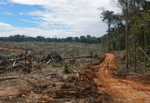 La gran deforestacin latinoamericana  NODAL